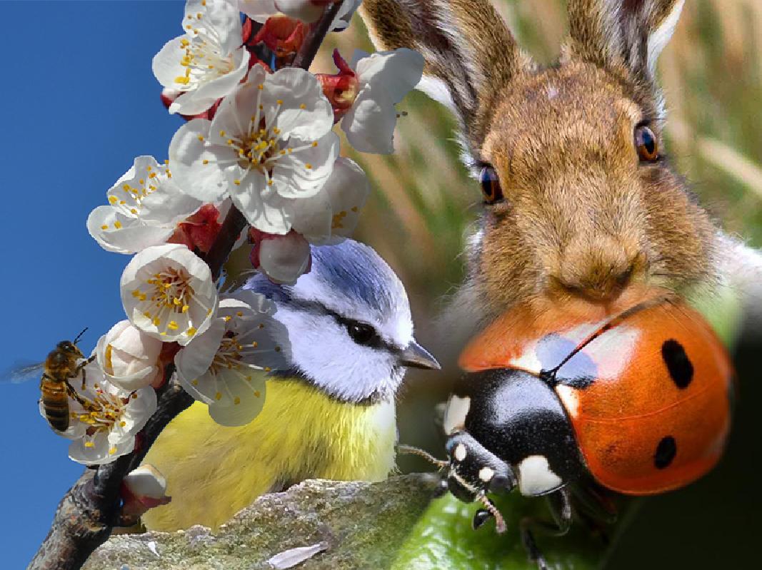Múltiples especies conviviendo con los productos de confusión sexual